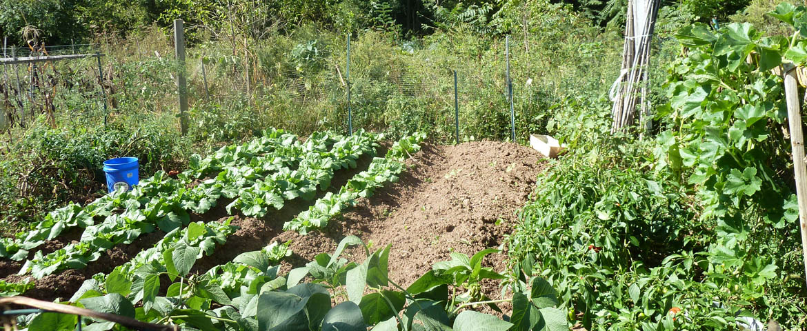 Photo: Cook Organic Garden plot.