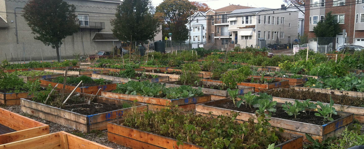Photo: Garden beds of the Hawthorne Ave Farm in Newark.